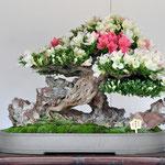 The Minister(総務大臣賞)    Variety :Akemi-no-tsuki     Winner:Shohachi Kimura     Address:Togane-shi Chiba