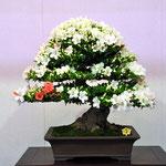 Prime Minister Award (内閣総理大臣賞)   Variety:Akitanishiki    Winner:Noboru Yamashita   Address:Sapporo-shi Hokkaido