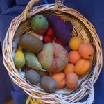 Filzfrüchte 5 bis 12Fr.