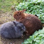 Franzi (braun) und Schlumpf ( logo blau) :-)