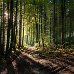 Morgenstimmung im Wald bei Peretshofen