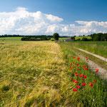 Frühsommer im Dachauer Hügelland