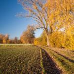 Herbstgold an der Weilach bei Aresing