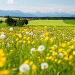 Prächtiger Frühlingstag im Bayerischen Oberland