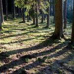 Im Reichertshauser Holz