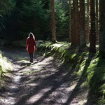 Stille Waldwanderung im Dürnbucher Forst