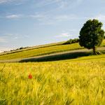 Sommerliche Felder im Paartal
