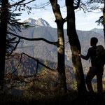 In den Wäldern der Blauberge