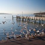 Dezember-Morgenstimmung am Starnberger See