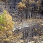 Nach dem verheerenden Waldbrand 2007 am Berg Pendeli bei Athen