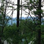 当館前の木立から望む南アルプス