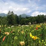 八峯苑上の花の里