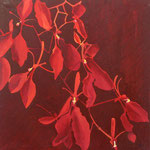 orchidée 50 x 50 cm acryl sur toile