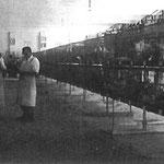 Preisrichter bei der Bewertung im Jahre 1950