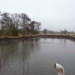 Der fast abgelassene Teich wird durchgefischt
