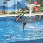 このプールには ジンベイザメも2匹ゆったり回遊していた。イルカとの対比がおもしろい。