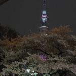 隅田公園内の桜越し