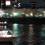 対岸の桜は台東区側の隅田公園