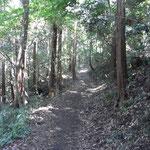 木漏れ日の小道が続き、思いもよらず気持ちの良いハイキングが出来た
