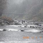 フィッシングセンター前の橋から 降りしきる雨のなかマス釣り