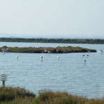 27.09. Flamingos bei Palavas