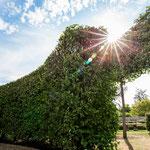 Garten- und Pflanzenfotografie im Ammerland