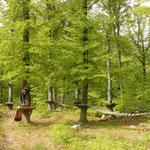 """""""Erlebniswald Ilsetal"""" - der Kletterpark in Ilsenburg liegt idyllisch im Wald"""