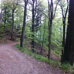 Anstieg von Ilsenburg zum Ilsestein