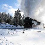 Die Dampflok der Harzer Schmalspurbahn auf dem Weg zum Brocken