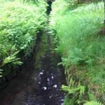 Schwarzenberger Wasserlauf: In der unterirdischen Grabenverbindung fühlen sich heute Lurche und Fledermäuse wohl