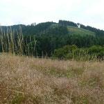 Am nordwestlichen Harzrand geht es oft steil nach oben