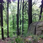 ...durch hellgrüne Buchenwälder