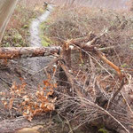 Unerwartete Hindernisse auf dem Borkenkäferpfad