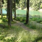 Wunderschön grün zeigt sich der Mittlere Grumbacher Teich zwischen den Bäumen