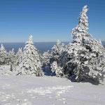 Wind und Schnee setzen den Fichten auf dem Brocken ziemlich zu