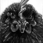 Battery Chicken (60 x 110; charcoal on paper; fixative) SOLD