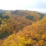 Aussicht von der Geierlay