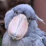 2002.11.12~ 上野動物園 サーナ♀
