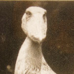 1973.3~1981 伊豆シャボテン公園 シュー♀
