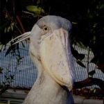 2003.8.19~ 上野動物園 ターノ♀~渡独