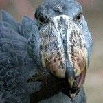 2002.11.12~2004.2.23 上野動物園 ボワナ
