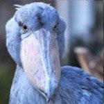 2002.11.12~ 上野動物園 アサンテ♀