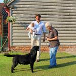 ROCHEBY GENTLEMAN GEORGE - CRUFTS 2013 1st Special Junior Dog