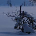 Замерзший скаут видимо задержался ещё с осени…