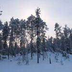 Вот так выглядит «Дом ветра» в утреннем свете со стороны озера. Обойдя там, где было возможно, как воевода Мороз, я сделал серию снимков утреннего леса, проснувшегося после новогодней ночи...