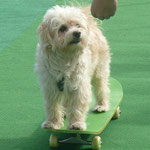 Marley skated
