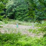 9番湿地作業中