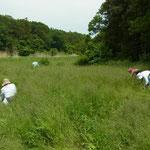 3・①番湿地改善予定地での作業