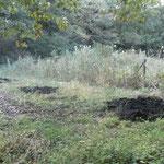 谷戸横断道下流側に新たに池を作る