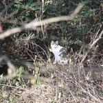 谷戸内のネコ